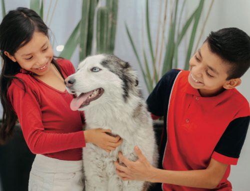 ¿Por qué a los niños les favorece tener mascotas?
